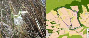 Estudio de impacto ambiental e Inventarios de flora y fauna