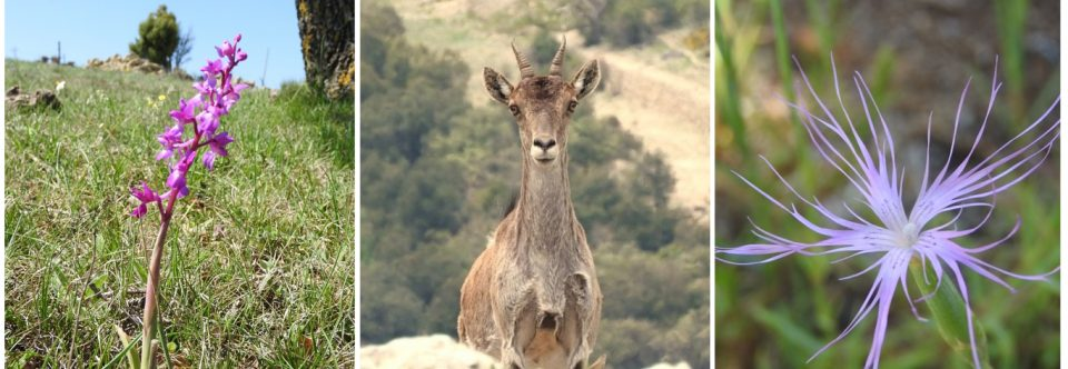 Inventarios de Flora y Fauna